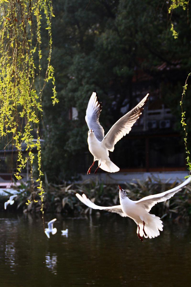 春节后我等跟老师去了一趟云南昆明,元阳,罗平,东川等地,欣赏了大自然